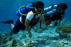 sailing diving philippines